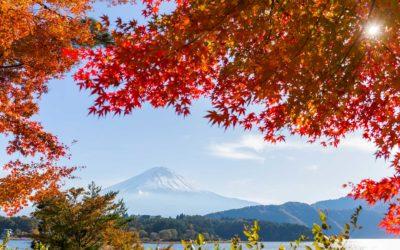 Inscription ALSH vacances d'automne 2020
